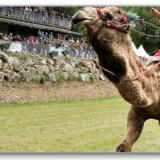 Talend ESB: Convertir du CSV en XML avec Camel